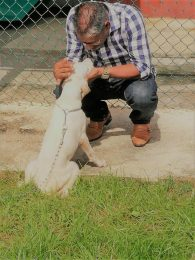 Senator the Honourable Clarence Rambharat, Minister of Agriculture, Land and Fisheries interacts with one of the dogs ahead of the Show