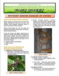 Fact_sheet_witches_broom_disease_of_cocoa