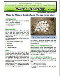 Factsheet_how_to_hatch_eggs_natural