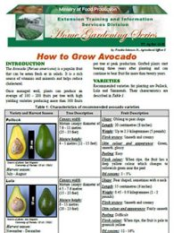 Howto Grow Avocado