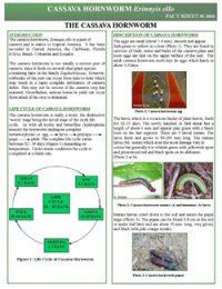 cassava_hornworm_thumbnail