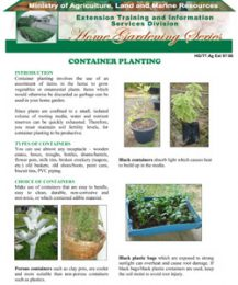 container-planting
