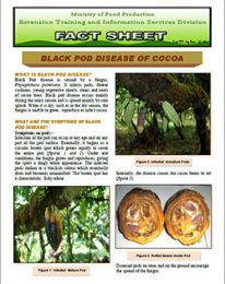 factsheet_black_pod_disease_of_cocoa
