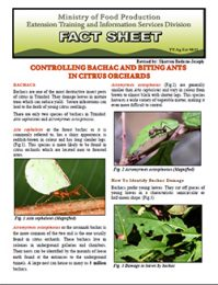 factsheet_controlling_bachac_and_biting_ants