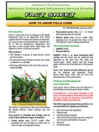 factsheet_corn