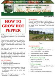 how-to-grow-hot-pepper