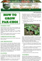 how-to-grow-pakchoi