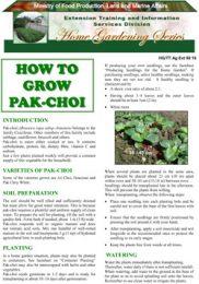 how-to-grow-pakchoi