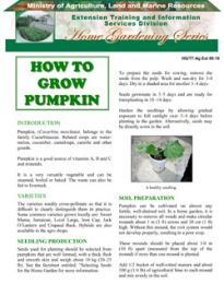 how-to-grow-pumpkin