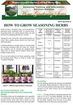 how-to-grow-seasoning-herbs