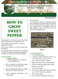 how-to-grow-sweet-peppers