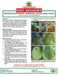 pest_advisory_bacterial_fruit_blotch