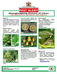 pest_alert_Haunglongbing_disease_of_citrus