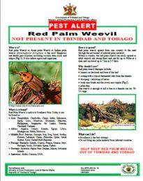 pest_alert_Red_Palm_Weevil