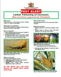 pest_alert_lethal_yellowing_coconuts