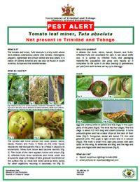 pest_alert_tomato_leaf_miner