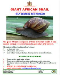 web14_50_Giant-African-snail-help-control-threat-Flyer_Poster