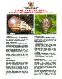 web15_51_Giant-African-snail-factsheet-general-Flyer