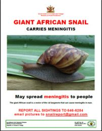 web16_52_GAS_Meningitis_Poster_Flyer-Flyer