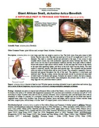 web_1_8_Giant-African-snail-factsheet-technical-Flyer