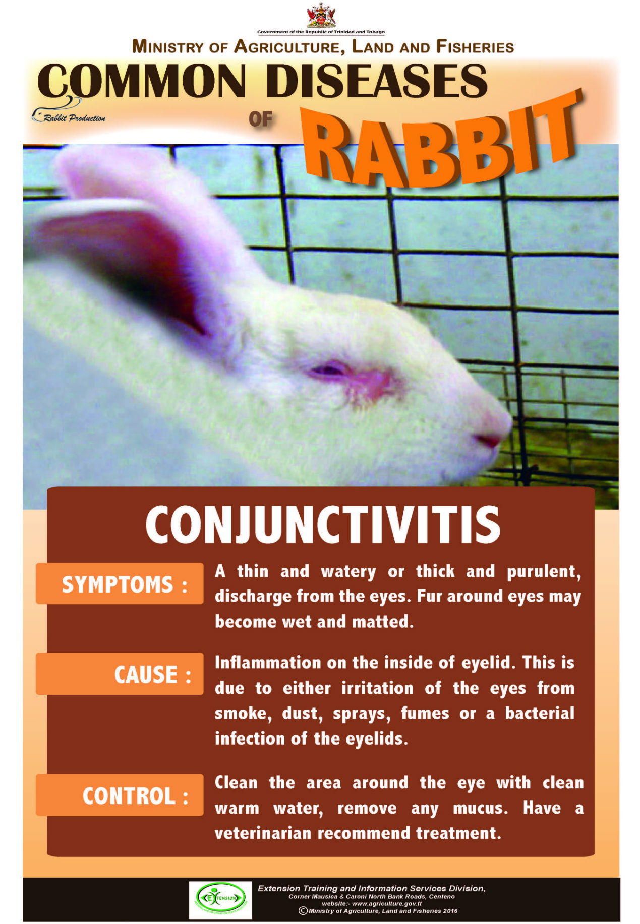 20 Common diseases of rabbits – CONJUNCTIVITIS   Ministry of ...