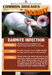 4-Common-diseases-of-rabbits – EARMITE-INFECTION_compressed-r47
