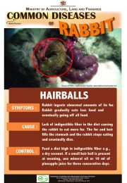 5-Common-diseases-of-rabbits – HAIRBALLS_compressed-r47