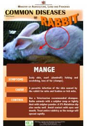 6-Common-diseases-of-rabbits – MANGE_compressed-r47