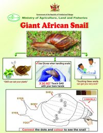 Giant African Snail children flyer 2-r47