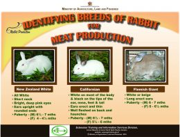 Identifying Breeds of Rabbit for Meat Production_compressed-r47