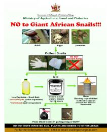 NO to Giant African Snail!!! general flyer with eggs June 2019 cb (letter)-r47