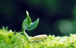 Plant Quarantine Image
