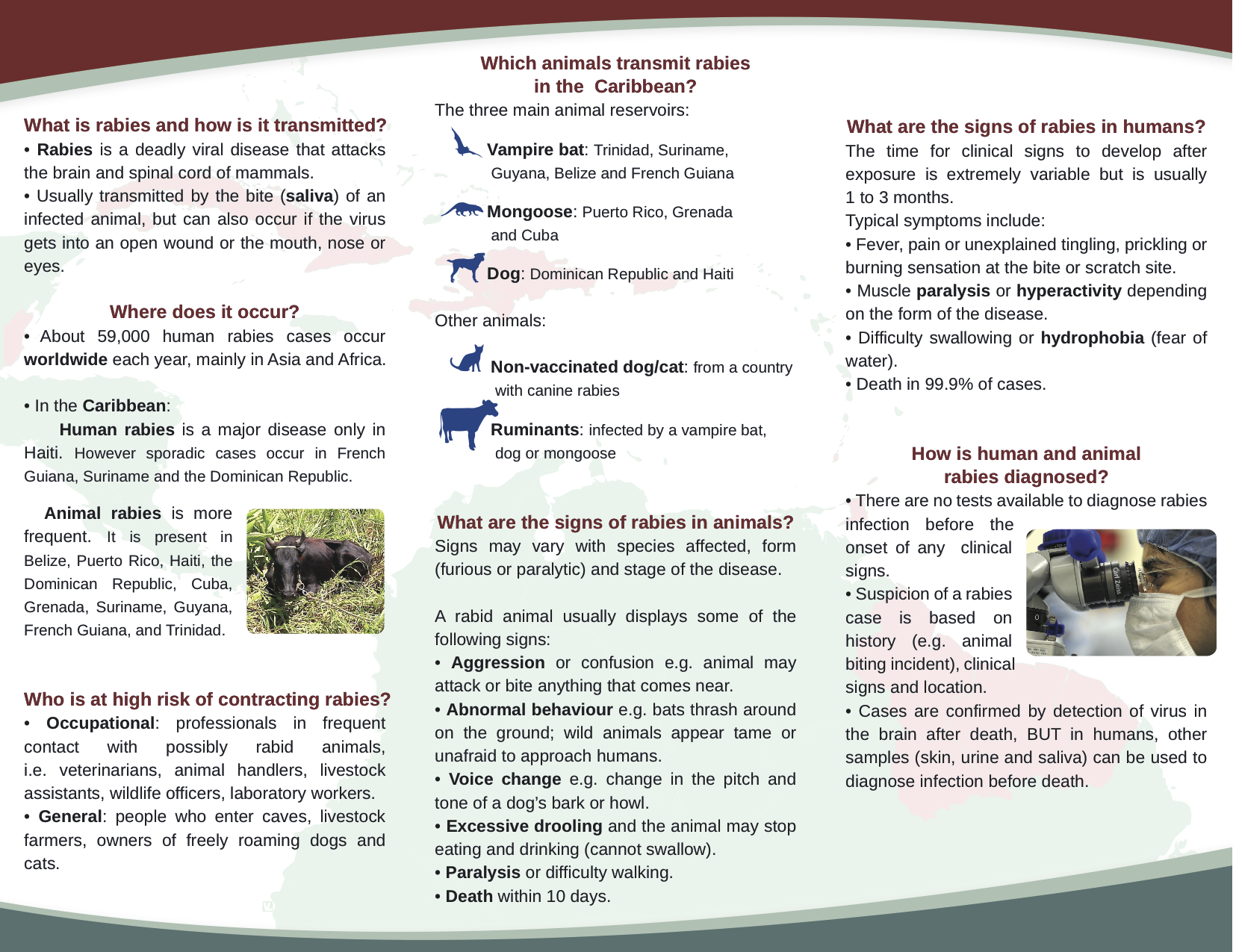 Rabies Brochure – blank-B